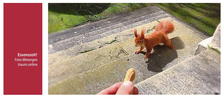 Kanzleieichhörnchen – Hessens Internet-Tier des Jahres